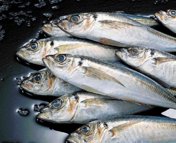 τα ψαρια προκαλουν διαβητη λεει το χαρβαρντ