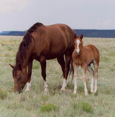 «ανθρακασ» απειλει βοοειδη και αλογα