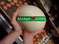 αποφασισμενοσ να σπασει αυγα ο γιωργοσ