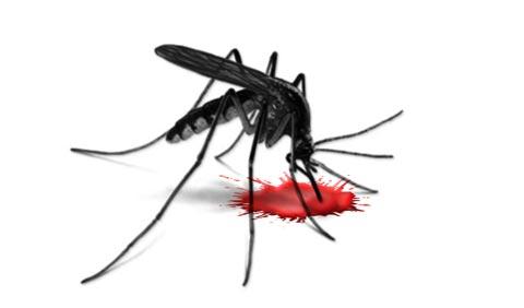 μαχη με κουνουπια φονιαδεσ!