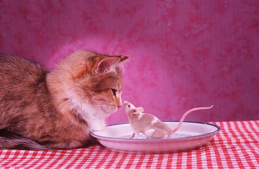 ποντικια πιανει;