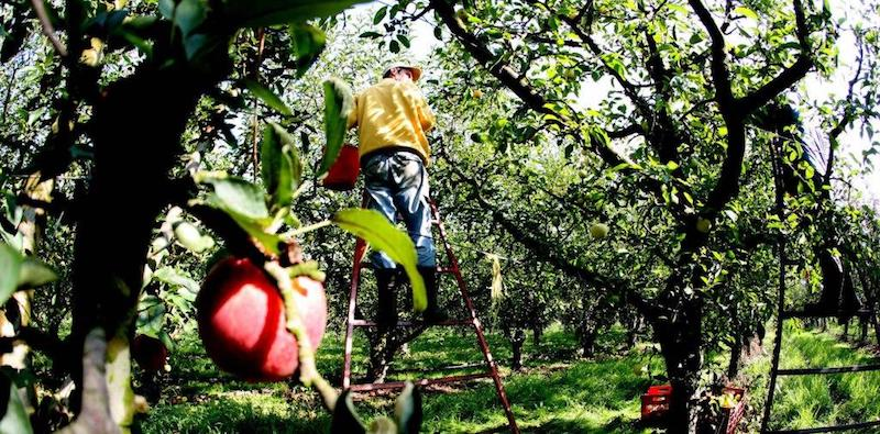 «με το δεξι» τα μηλα