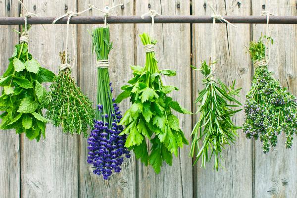 ο λογοσ στα αρωματικα φυτα
