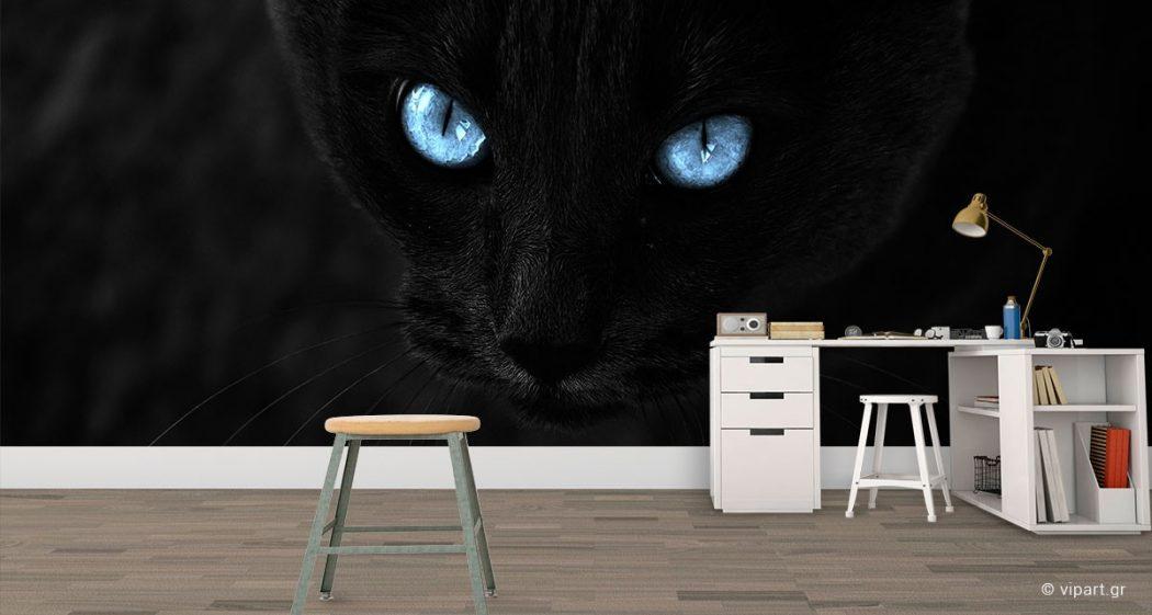 μαύρη γάτα ο λούλης και για τον τσίπρα