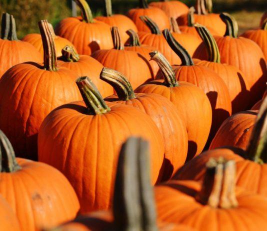 Η Μελίνα Κριτσωτάκη μας παρουσιάζει το κολοκύθι. Και ως πρωταγωνιστής στο Halloween αλλά κυρίως στο τραπέζι και την καθημερινή μας διατροφή. Στο τέλος δε, υπάρχει και η έκπληξη. Μια καταπληκτική συνταγή για γλυκιά κολοκυθόπιτα. new deal