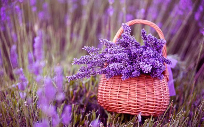 Η Μελίνα Κριτσωτάκη μας παρουσιάζει τη λεβάντα. Πρόκειται, ίσως, για το πιο γνωστό αρωματικό φυτό με πολλές ιδιότητες και έντονο άρωμα. Μπορεί να χρησιμοποιηθεί και σαν καλλωπιστικό λόγω των χαρακτηριστικών λιλά – μωβ ανθέων της. new deal